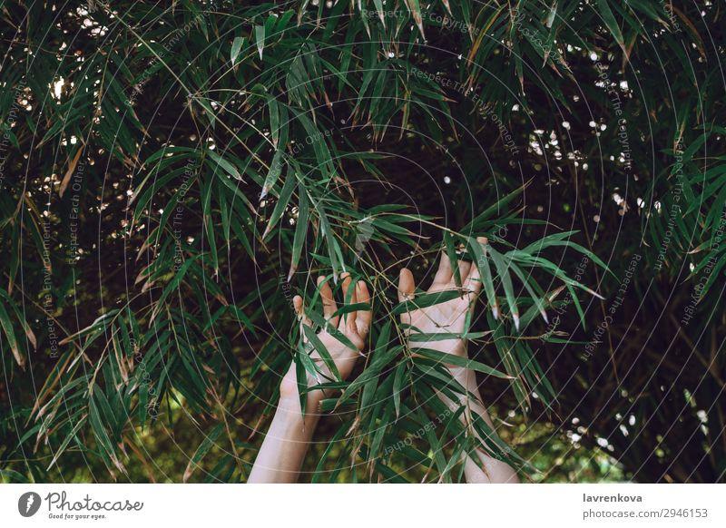 Frau Natur Sommer Pflanze grün Hand Baum Wald Hintergrundbild Garten Finger Jahreszeiten Bambus Erreichen