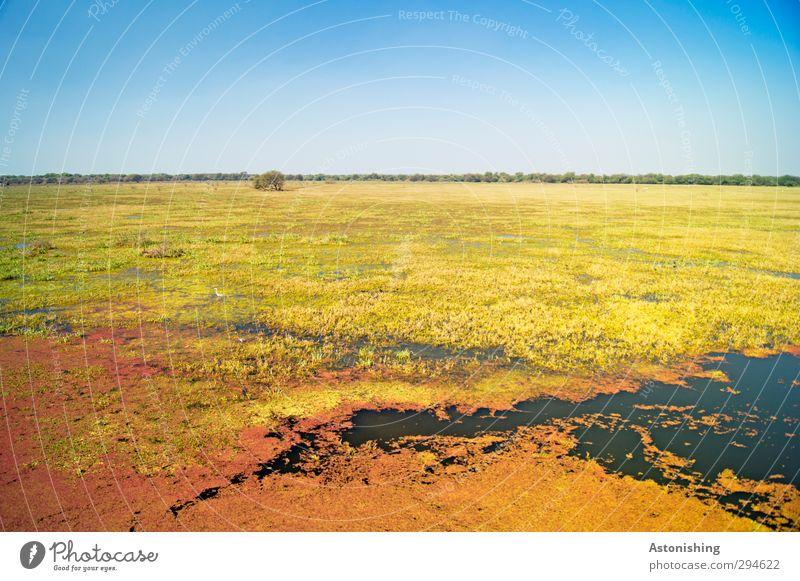 weite Ebene Umwelt Natur Landschaft Pflanze Urelemente Erde Luft Wasser Himmel Wolkenloser Himmel Horizont Frühling Klima Wetter Schönes Wetter Wärme Gras