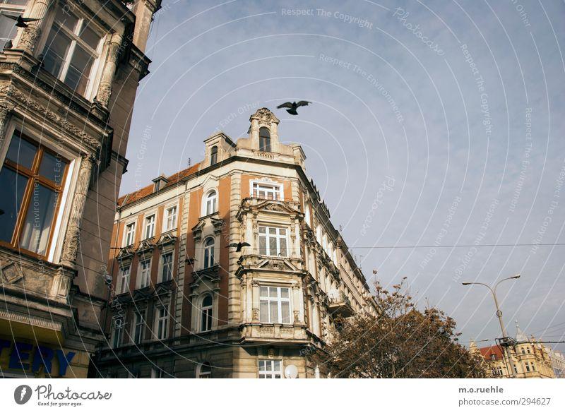 Breslau Birds Lifestyle Haus Himmel Wolkenloser Himmel Winter Schönes Wetter Polen Stadt Stadtzentrum Fassade Fenster Tier Vogel Taube 2 alt authentisch blau
