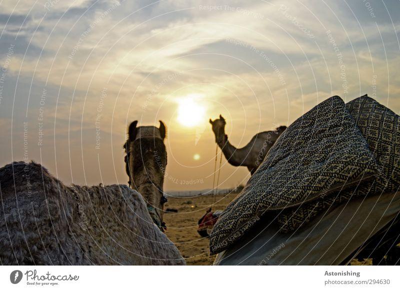 camels Himmel Natur Sonne Tier Landschaft Wolken Umwelt gelb Wärme Wetter Tierpaar Wildtier groß stehen Schönes Wetter Abenteuer
