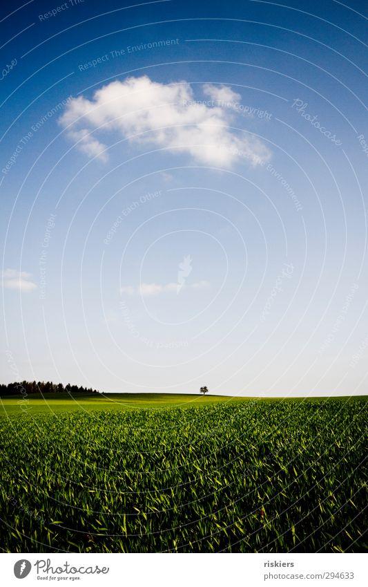 I´m a little tree in a big world. Himmel Natur blau grün Baum Landschaft Wolken ruhig Wald Umwelt Ferne Wiese Frühling klein Horizont Feld
