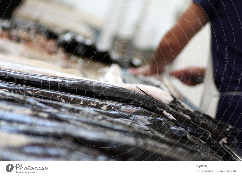 Fisch satt Degenfisch Schlangenmakrele Makrele Ernährung Slowfood Fischereiwirtschaft Fischverkäufer Fischmarkt Fischgeschäft Gastronomie maskulin
