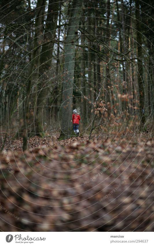 Hobbit Mensch Einsamkeit Wald Gefühle träumen einzigartig geheimnisvoll Irritation nachhaltig skurril bizarr Identität Sinnesorgane mystisch verloren Zwerg