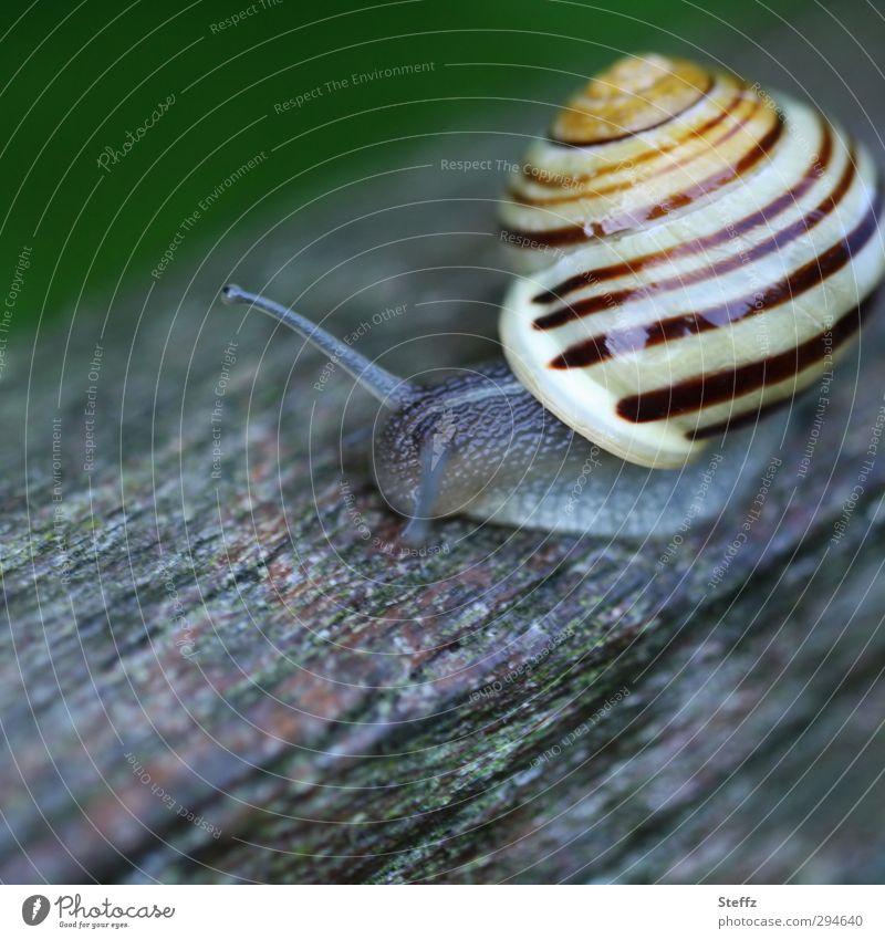 Schneckentempo Schneckenhaus langsam unterwegs vorwärts Langsamkeit Holz kriechen kriechende Schnecke klein Zeitlupe nah rund grau gestreift Spirale symmetrisch