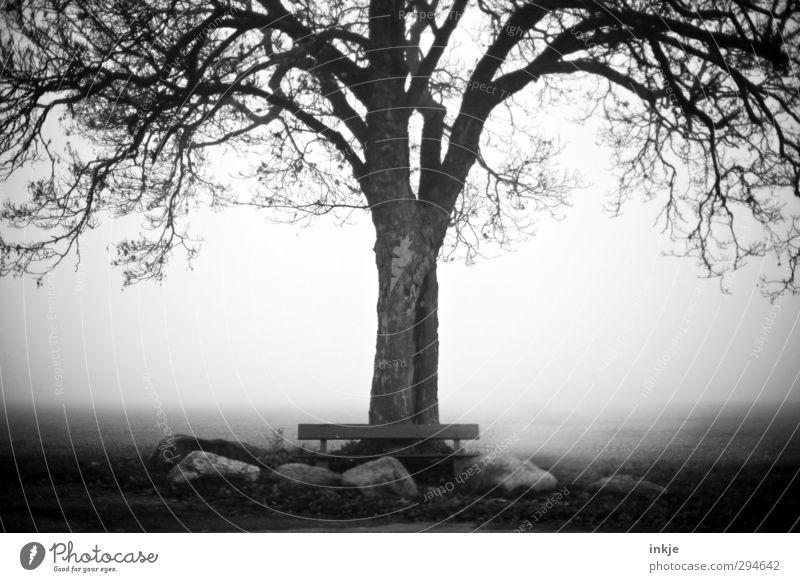 Was uns bleibt, sind die Erinnerungen Natur alt Baum Einsamkeit ruhig Winter Umwelt dunkel kalt Herbst Gefühle Stimmung Feld Nebel Idylle Bank