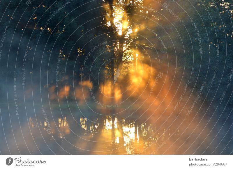 Lichtblick | Sonne vertreibt Dunkelheit Natur Wasser Nebel Park Wald Seeufer Teich leuchten außergewöhnlich fantastisch hell gelb gold Gefühle Stimmung Kraft