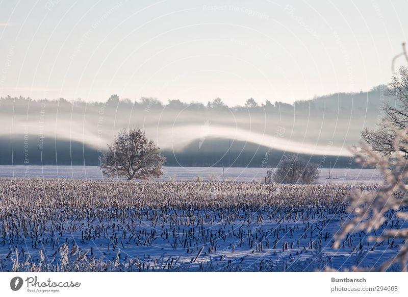 Winterhauch Umwelt Natur Landschaft Urelemente Erde Himmel Sonnenaufgang Sonnenuntergang Sonnenlicht Wetter Schönes Wetter Nebel Eis Frost Schnee Baum