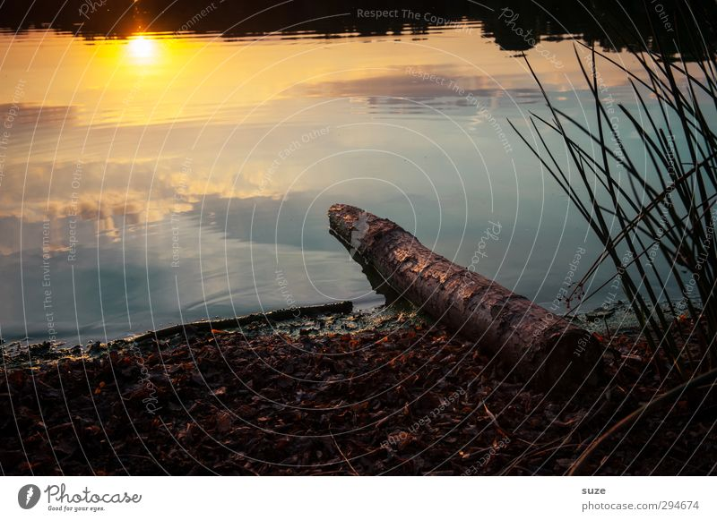 Lichtblick | am Abend harmonisch ruhig Meditation Sommer Sonne Umwelt Natur Landschaft Urelemente Wasser Horizont Schönes Wetter Gras Wiese Seeufer authentisch