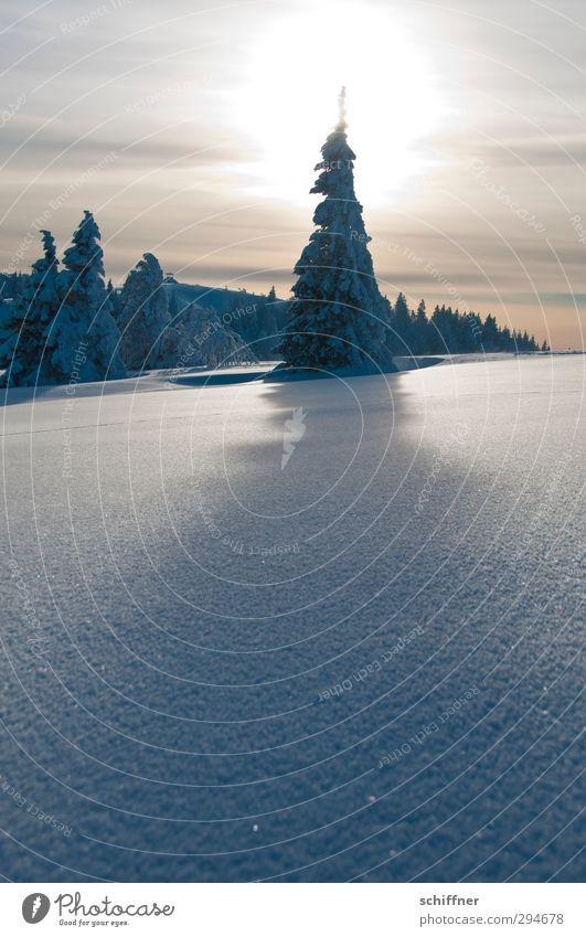 Lichtblick | Oh Tannenbaum Natur Pflanze Sonne Baum Landschaft Winter Umwelt Berge u. Gebirge Schnee außergewöhnlich Eis Schönes Wetter Spitze Frost Gipfel Hügel