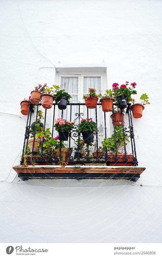 Topblumen Ferien & Urlaub & Reisen Häusliches Leben Wohnung Pflanze Blume Blatt Blüte Grünpflanze Topfpflanze Kleinstadt Haus Mauer Wand Fassade Balkon Terrasse