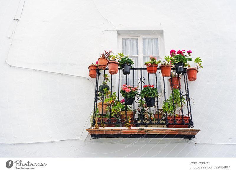 Hauswandbiotop Häusliches Leben Wohnung Garten Pflanze Sommer Blume Blatt Blüte Grünpflanze Topfpflanze Bauwerk Gebäude Mauer Wand Balkon Stein Blühend