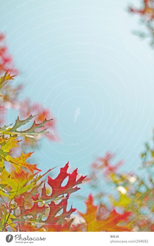 Lichtblick | Osterfarben überall Natur Pflanze Baum Wald Umwelt Herbst Park Klima Schönes Wetter Herbstbeginn