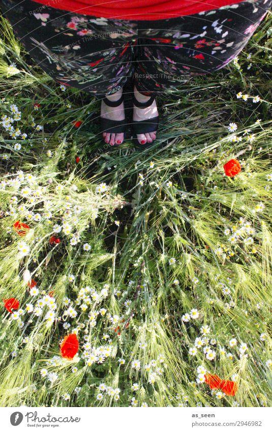 Eins mit der Natur Zehennagel Ausflug Sommer Frau Erwachsene Beine Fuß Frühling Gras Mohn Mohnblüte Feld Mode Hose Stoff Blumenmuster Schuhe Sandale stehen