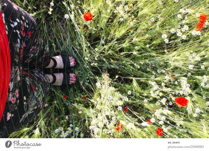 Eins mit der Natur Nagellack Ausflug Sommer Garten Frau Erwachsene Beine Fuß 1 Mensch Frühling Schönes Wetter Gras Blüte Mohn Mohnblüte Feld Hose Blumenmuster