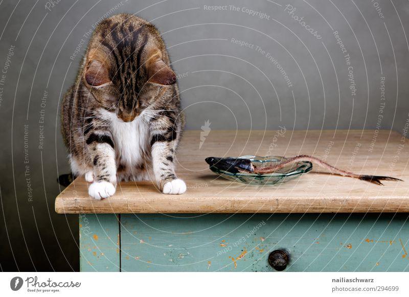 Ups.... Katze grün schön Tier Traurigkeit lustig grau Denken braun niedlich beobachten genießen Appetit & Hunger lecker Haustier hängen