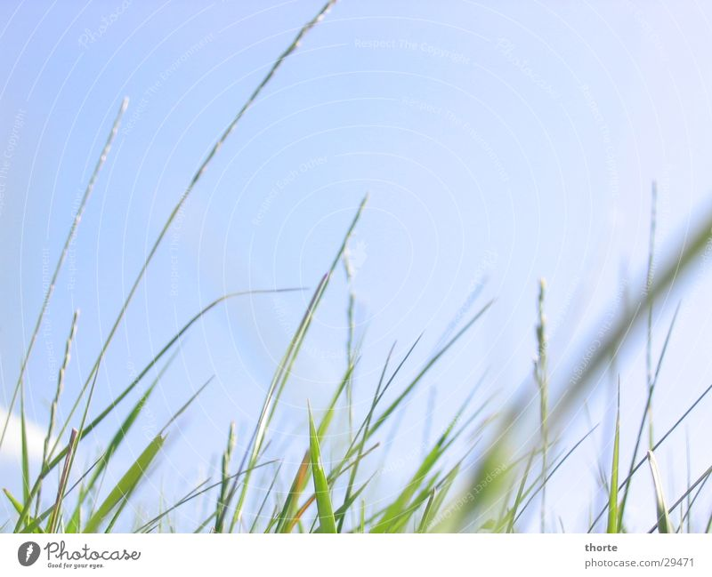 Grasgeflüster I Himmel grün blau