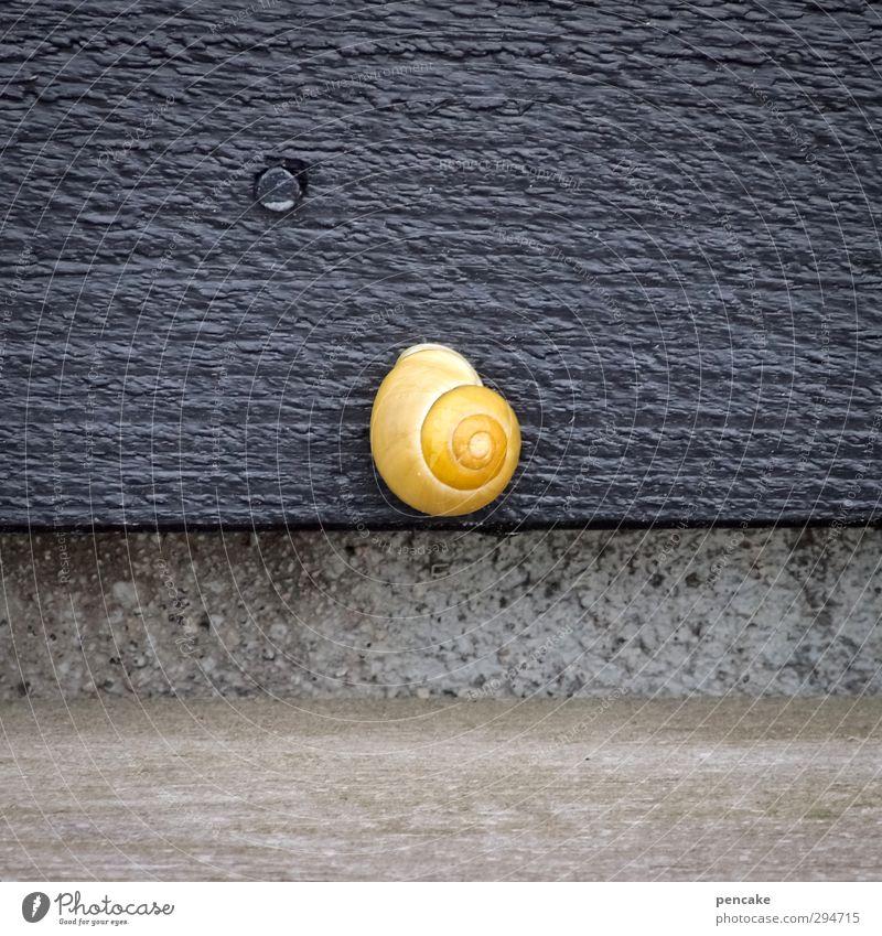 lichtblick | der mond ist aufgegangen Tier Urelemente Nachthimmel Schönes Wetter Haus Fassade Stein Holz Gold ästhetisch hoch positiv schleimig feminin gelb