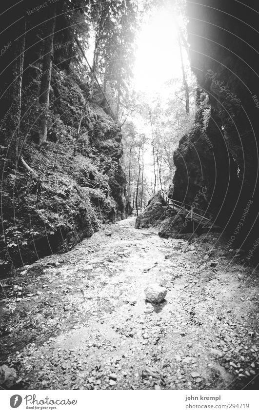 Lichtblick | Lichtblick Natur Baum Einsamkeit ruhig Wald Berge u. Gebirge Umwelt Wege & Pfade Horizont wandern Idylle authentisch Lebensfreude Romantik