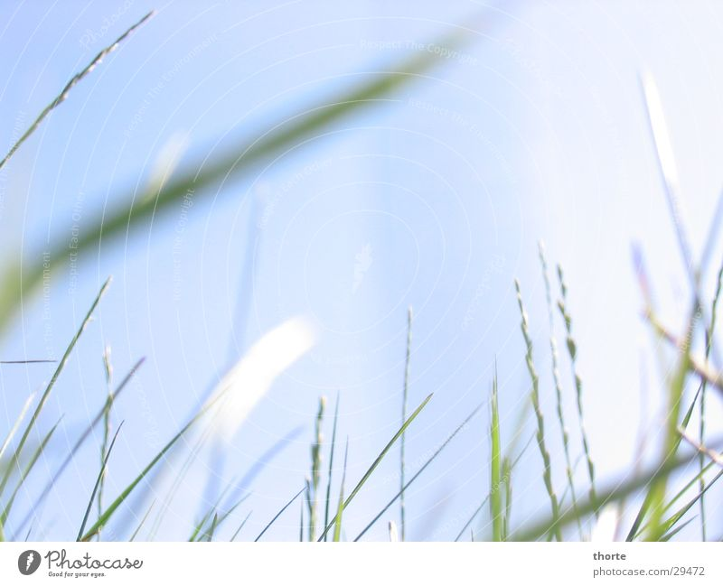 Grasgeflüster II Himmel grün blau