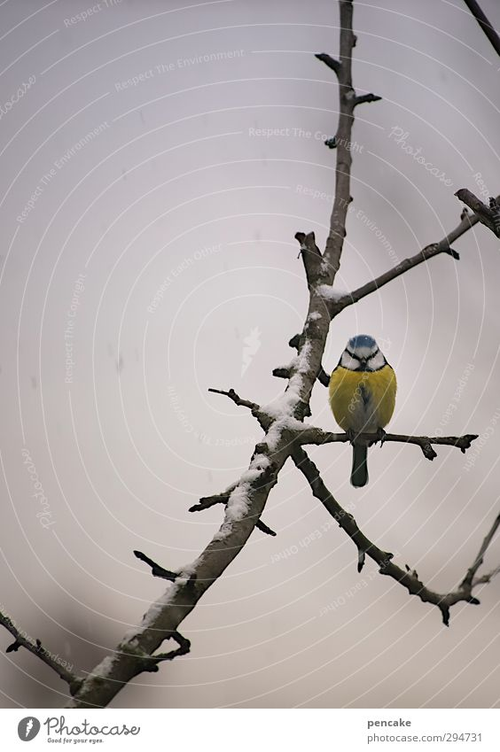 chabibi Natur Frühling Winter Klima Wetter schlechtes Wetter Eis Frost Schnee Schneefall Baum Garten Wildtier Vogel 1 Tier authentisch frei Gesundheit niedlich