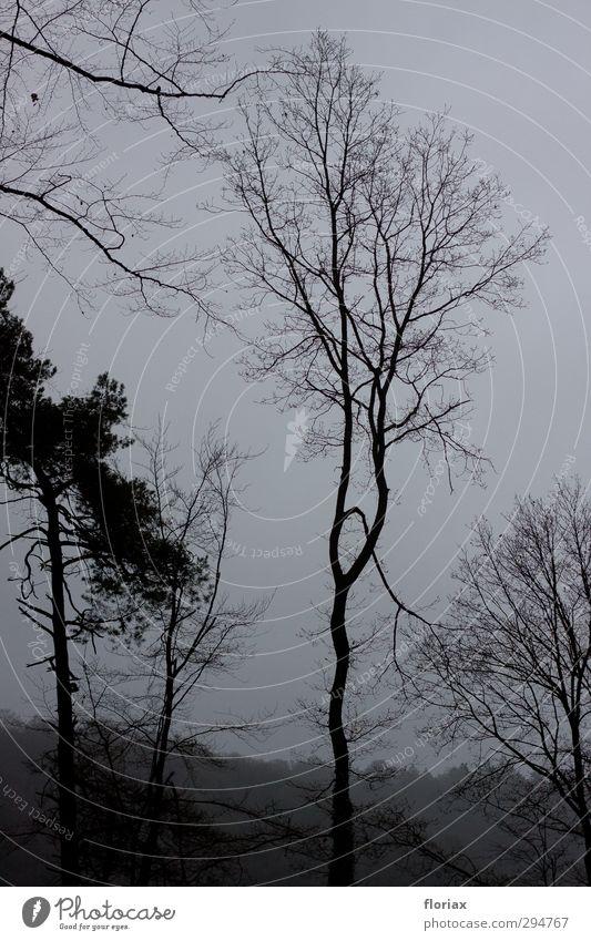 Nebelwald Umwelt Natur Landschaft Pflanze Himmel Herbst Klima Klimawandel schlechtes Wetter Baum Wald Hügel Menschenleer Erholung gehen genießen Traurigkeit