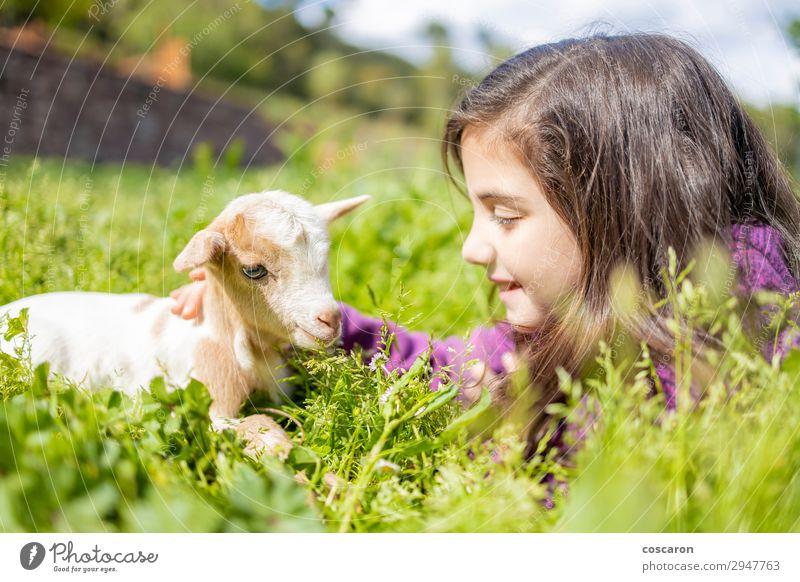 Kleines Mädchen sieht eine Ziege auf dem Gras. Lifestyle Glück schön ruhig Freizeit & Hobby Spielen Ferien & Urlaub & Reisen Sommer Sommerurlaub Garten Kind