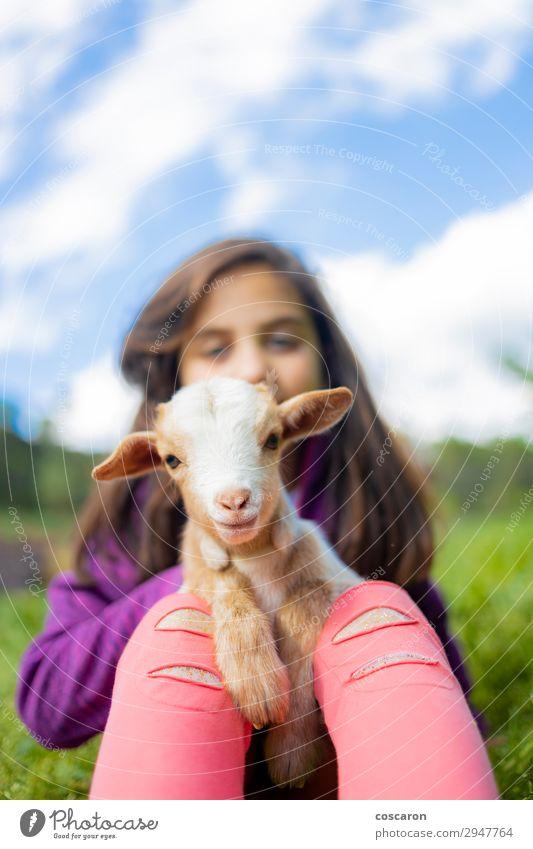 Kleines Mädchen umarmt eine Ziege auf einem Feld. Lifestyle Glück schön Freizeit & Hobby Spielen Sommer Sommerurlaub Garten Kind Mensch feminin Kleinkind Frau