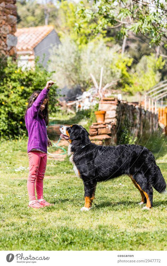Kleines Mädchen trainiert einen Berner Sennenhund Lifestyle Freude Glück schön Freizeit & Hobby Spielen Sommer Garten Bildung Kind Lehrer Azubi Hochschullehrer