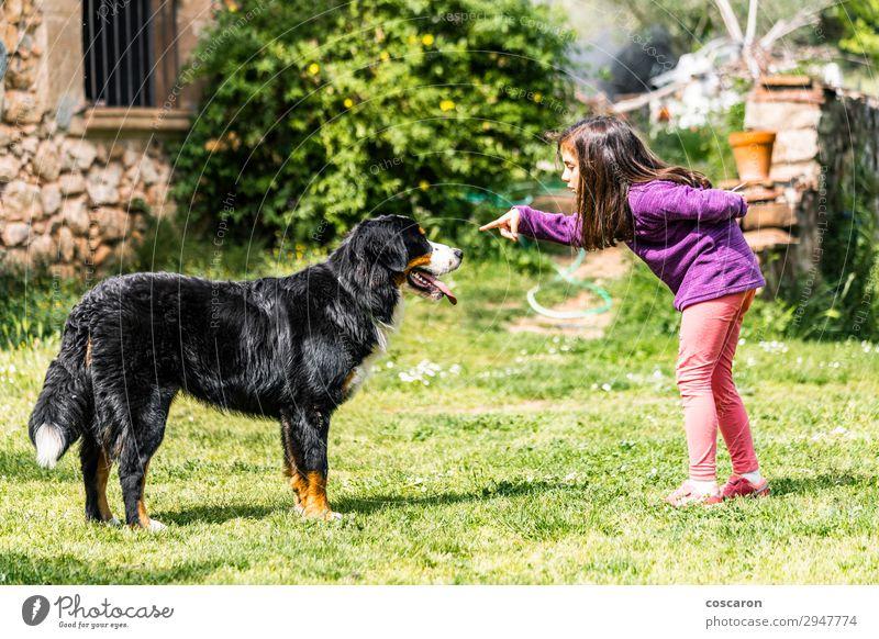 Kind Mensch Ferien & Urlaub & Reisen Natur Hund Sommer schön grün Hand Tier Freude Mädchen Lifestyle sprechen Liebe Frühling