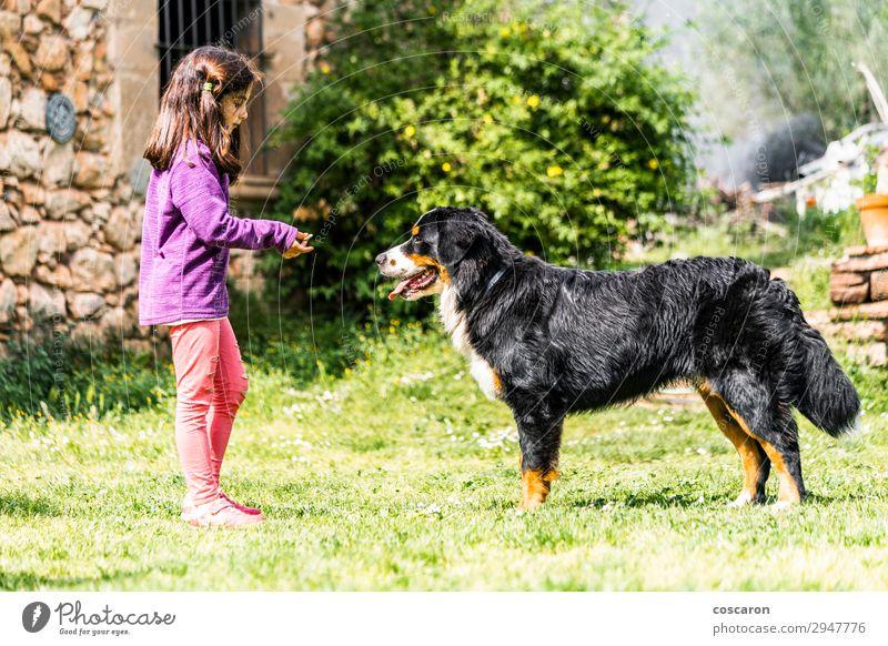 Kleines Mädchen trainiert einen Berner Sennenhund Lifestyle Freude Glück schön Freizeit & Hobby Spielen Ferien & Urlaub & Reisen Sommer Sommerurlaub Garten Kind