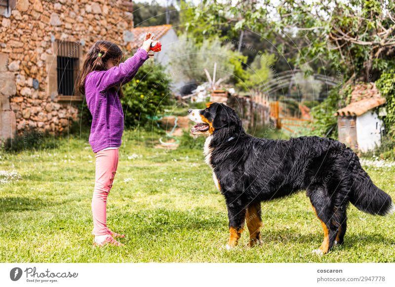 Frau Kind Mensch Natur Hund Sommer schön grün Hand Blume Tier Freude Mädchen Lifestyle Erwachsene Liebe