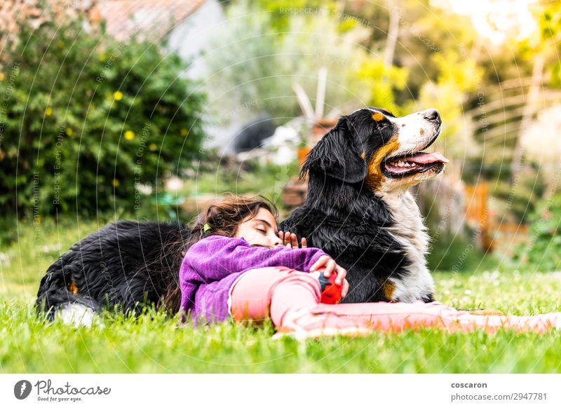 Kleines Mädchen schläft auf einem Berner Sennenhund. Lifestyle Freude Glück schön Leben Ferien & Urlaub & Reisen Sommer Sonne Garten Kind Mensch feminin