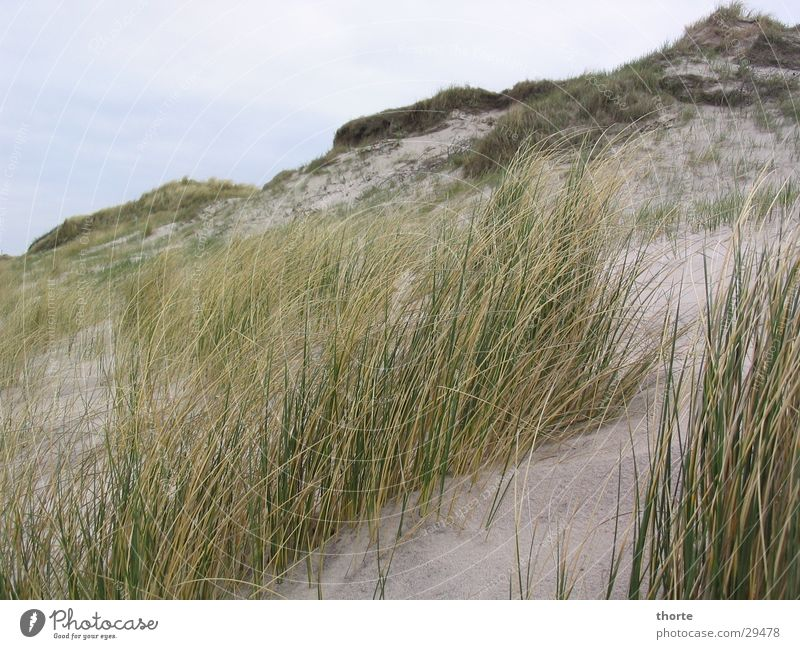 Düne Himmel Strand Wolken Gras Sand Europa Dänemark