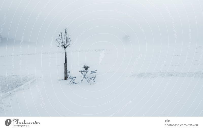 veronika, der lenz is da Natur Pflanze Einsamkeit Landschaft ruhig Winter kalt Umwelt Frühling Wiese Schnee Horizont Schneefall Nebel leer Tisch