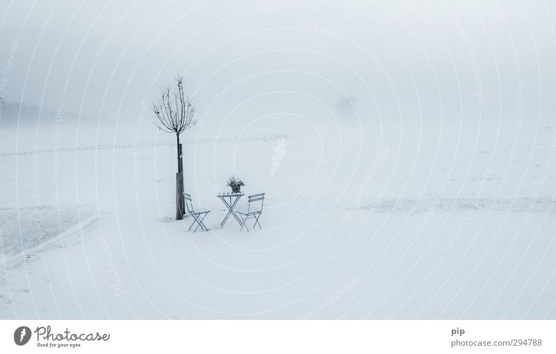 veronika, der lenz is da Umwelt Natur Landschaft Frühling Winter Klimawandel Nebel Schnee Pflanze Wiese kalt Einsamkeit Erwartung Tisch Stuhl Biertische Frost