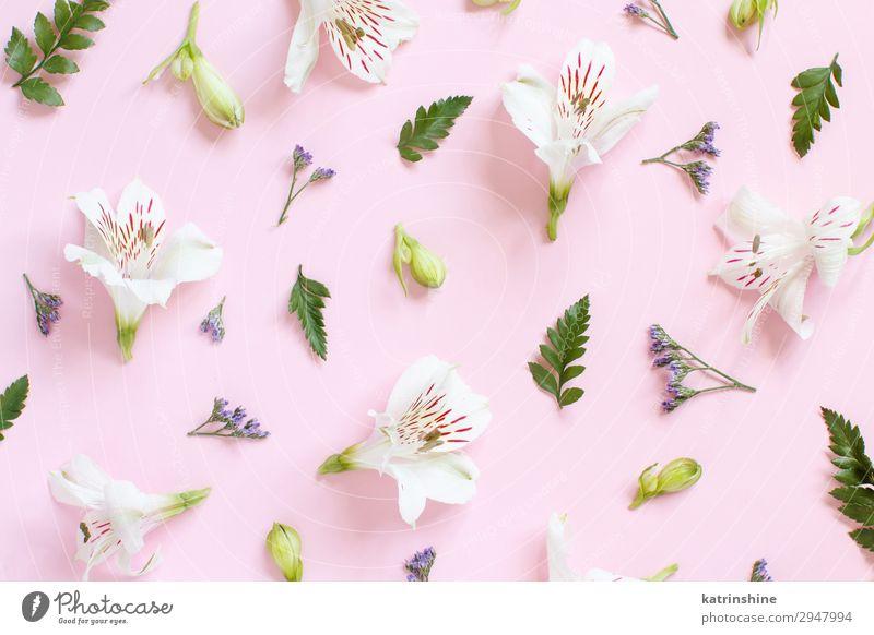 Blumen auf einem hellrosa Hintergrund Design Dekoration & Verzierung Valentinstag Muttertag Hochzeit Frau Erwachsene oben weiß Kreativität romantisch Pastell
