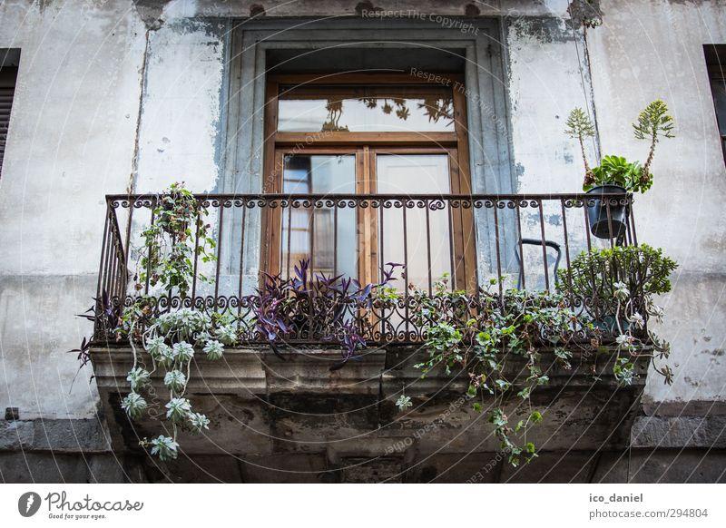 Fenster zum Hof II Ferien & Urlaub & Reisen Stadt Sommer Pflanze Haus Wand Architektur Mauer Gebäude Fassade Wohnung Lifestyle Häusliches Leben Tourismus