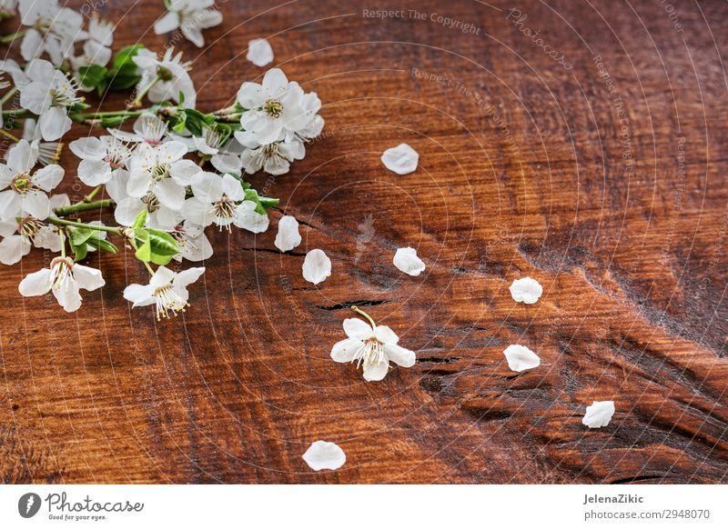 Frühlingsblumen auf Holzuntergrund Apfel schön Sommer Garten Dekoration & Verzierung Gartenarbeit Natur Pflanze Baum Blume Blatt Blüte alt Blühend frisch weich