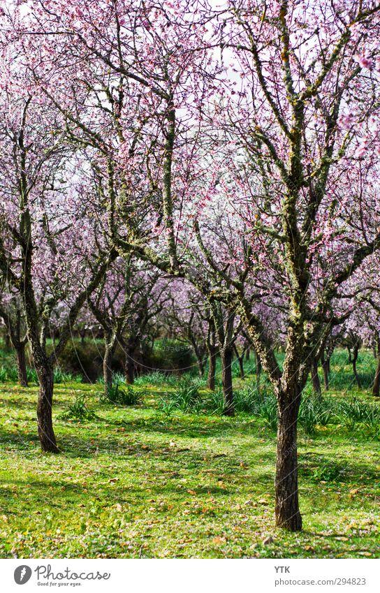 I don't matter, if you're rosa or white Umwelt Natur Landschaft Pflanze Urelemente Erde Himmel Klima Wetter Schönes Wetter Baum Gras Moos Blatt Blüte