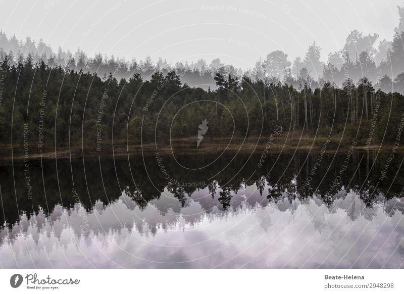 Eiszeit | Blindensee im Winter Natur Pflanze Landschaft Baum Erholung Gesundheit Zufriedenheit Freizeit & Hobby Kommunizieren Kraft ästhetisch Beginn beobachten