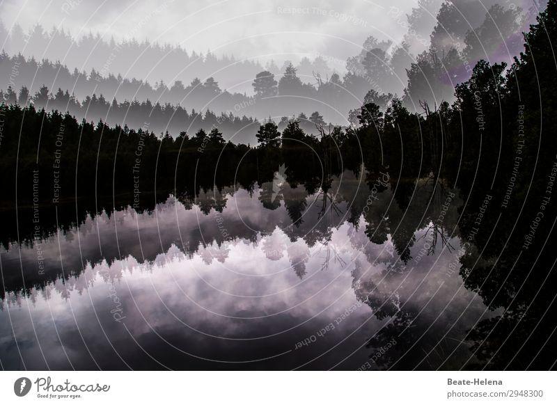 wertvoll   Ruhepunkt Blindensee im Schwarzwald Ferien & Urlaub & Reisen Natur Pflanze Wasser Landschaft Baum Erholung Wald dunkel außergewöhnlich See Ausflug