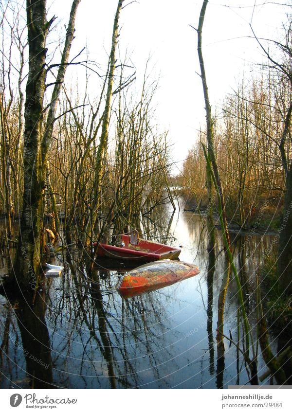 broken boat See Wasserfahrzeug Meer Ruderboot Baum Fluss