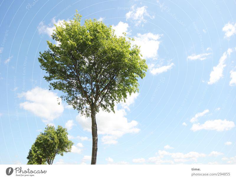 Frühling, mach hinne! Himmel Natur Pflanze Baum Wolken Freiheit Gesundheit hell Zeit Luft Klima frisch Schönes Wetter Fröhlichkeit Beginn