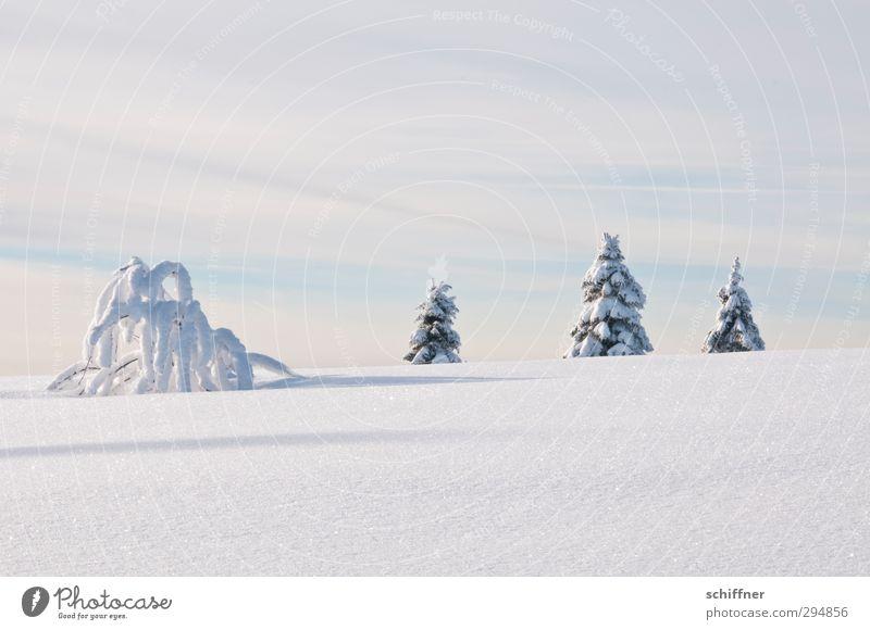 4 sind einer zuviel Natur Landschaft Wolken Winter Schönes Wetter Eis Frost Schnee Pflanze Baum Sträucher Hügel Schneebedeckte Gipfel außergewöhnlich kalt weiß