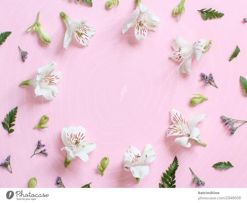 Frau weiß Blume Erwachsene Textfreiraum rosa oben Design Dekoration & Verzierung Kreativität Hochzeit Mutter Entwurf geblümt Engagement