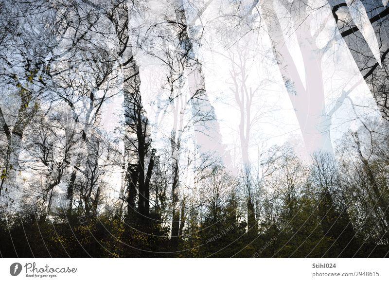 ....vor lauter Bäumen nicht. Baum Wald stehen bedrohlich dunkel gigantisch gruselig grau schwarz Trauer Verzweiflung Schizophrenie Borderline Angst