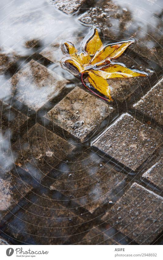Gelbes Blatt in einer Pfütze Wolken Herbst Regen nass gelb Großstadt fallen fliegend Regenwasser Platten untergetauchtes Bürgersteiggitter gesunken Wasser