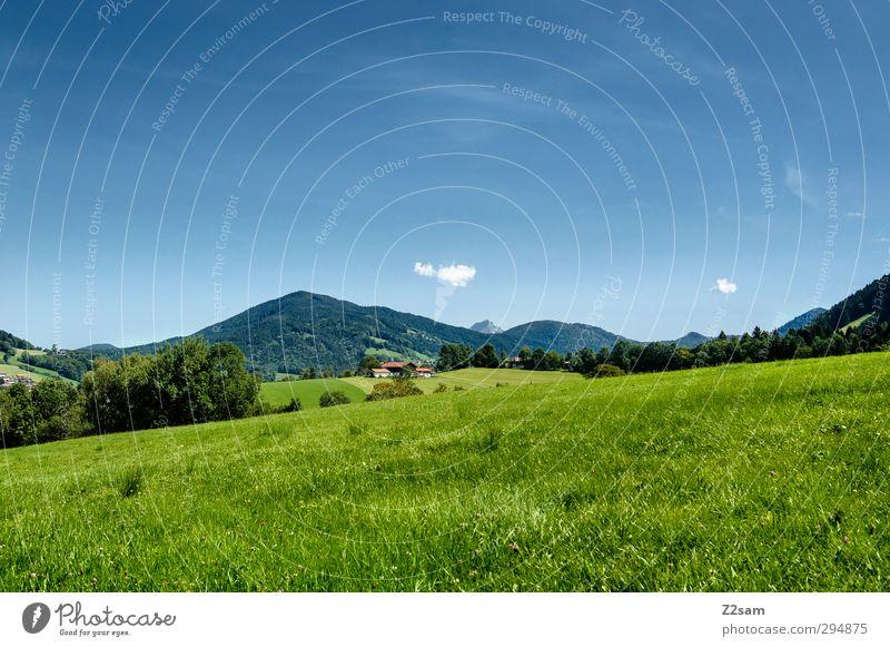wo ist Heidi? Umwelt Natur Landschaft Wolkenloser Himmel Sommer Schönes Wetter Sträucher Wiese Hügel Alpen Berge u. Gebirge frisch nachhaltig Einsamkeit