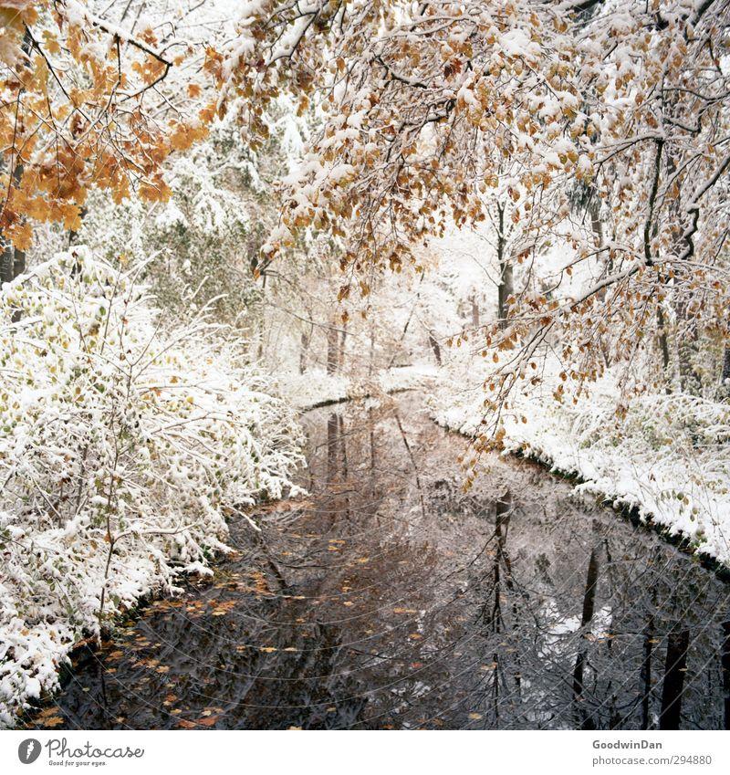 Einer dieser Tage. Umwelt Natur Wetter Schönes Wetter Schnee Pflanze Baum Sträucher Park Bach außergewöhnlich fantastisch kalt viele wild Stimmung Farbfoto