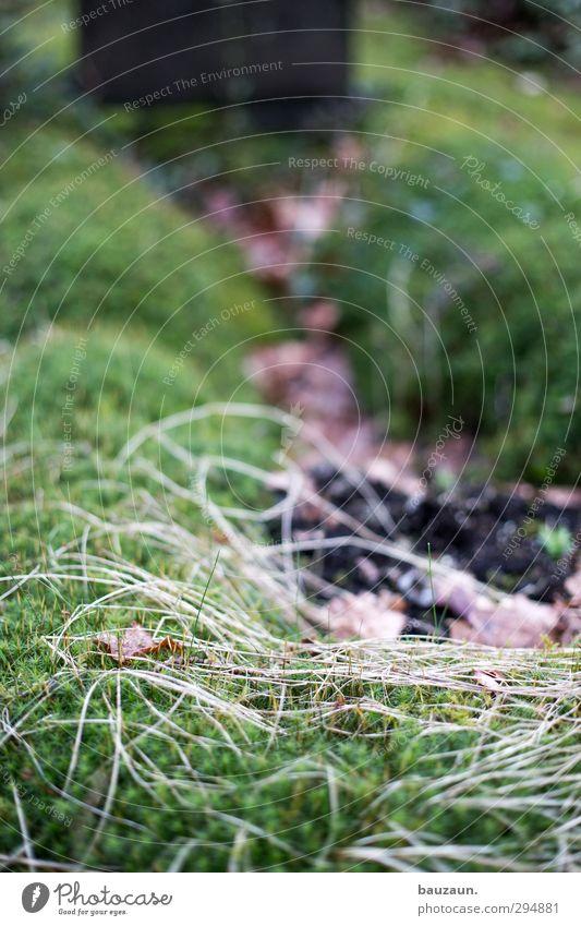 grünzeug. Garten Trauerfeier Beerdigung Gartenarbeit Natur Pflanze Erde Sträucher Moos Park Wege & Pfade Traurigkeit trist braun Mitgefühl ruhig Tod Einsamkeit